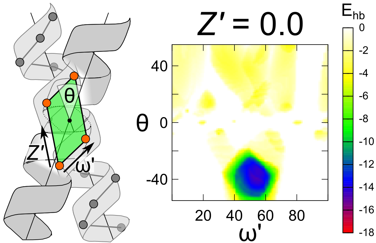 Image of A geometric analysis of transmembrane dimers demonstrates that the important GAS-right motif is optimized to form carbon hydrogen bonds