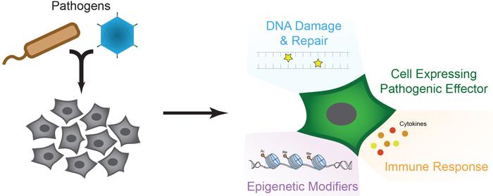 Characterization of pathogenic effectors cartoon